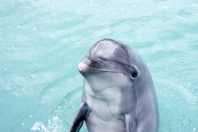 イルカの脳