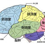 大脳の機能と構造ほか「頭頂葉」「側頭葉」「後頭葉」「前頭葉」