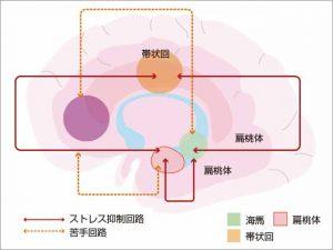 脳の回路図